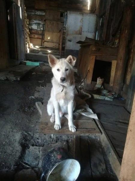 Потерялась собачка, пожалуйста, помогите! Кто увид...