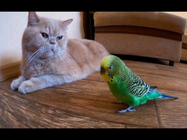 Говорящий попугай общается с котом