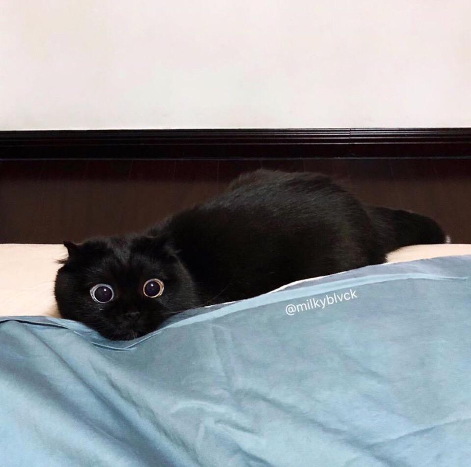 - Котик, сегодня ты идёшь на работу- Штооооооо?????