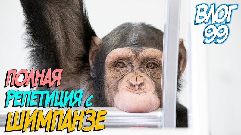 Полная репетиция с шимпанзе на самоизоляции Приехало телевидение РТР Животные за кулисами цирка