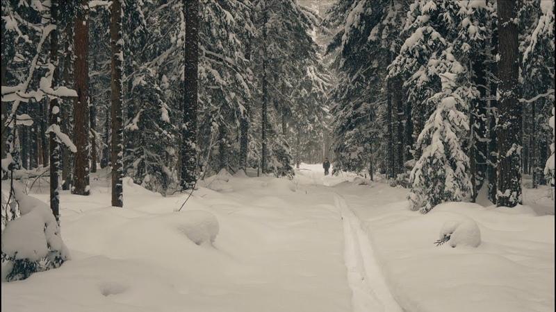 Лесные зарисовки, снежный лес февраля (nature winter) 4К | Эпизод 16