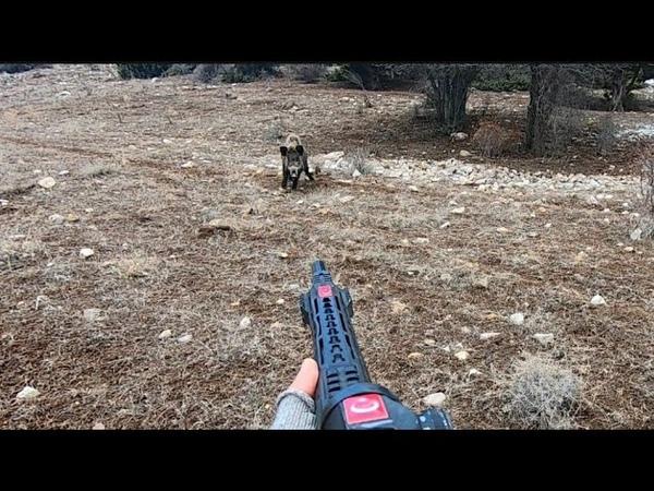 Harika çekimlerle dolu yaban domuzu avıPerfect Wild boar hunting in Turkey.