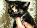 Шикарные котята ищут свой дом