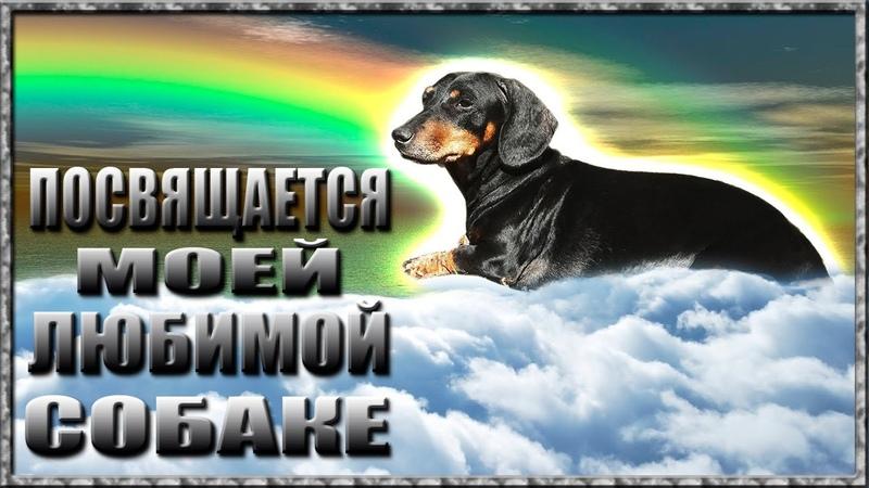 Посвящается моей любимой собаке Собачья жизнь
