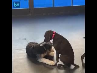 Её зовут Люси и она обожает гладить других собак
