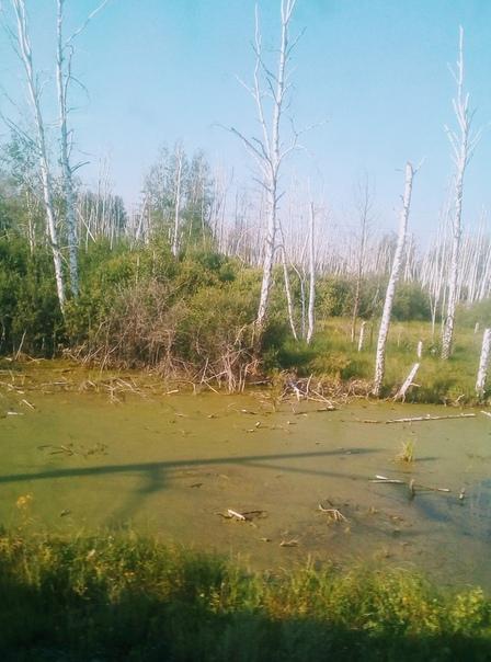 таинственные круги на омском болоте фото одна