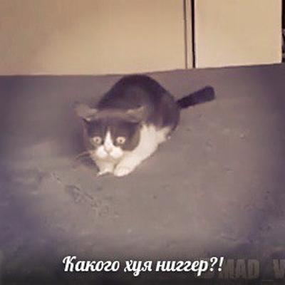 Никита Фрэй