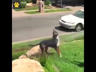 Неуклюжие животные