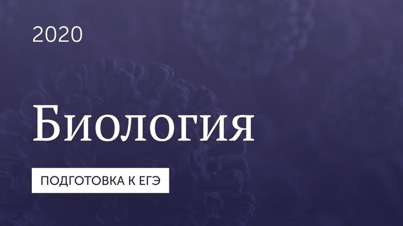 Подготовка к ЕГЭ 2020 Биология Часть 12