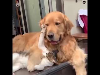 Любовь между животными!