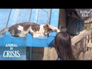 Miracle Happened To Cat Injured By Snare After Meeting A Kind Girl(Part 2) | Animal in Crisis EP140