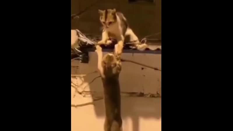 Срочно оскара этим котам! Играют идеально.mp4
